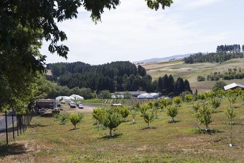 WSU Eggert Farm