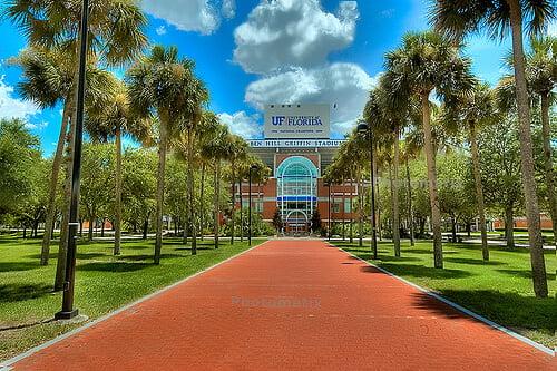 University of Florida best online psychology degree