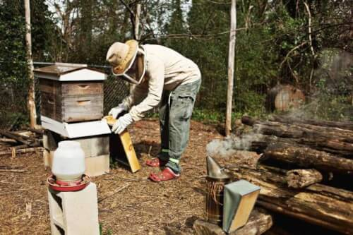 NC State online permaculture