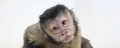 franklin and marshall animal behavior program
