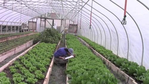 Dickinson College Organic Farm