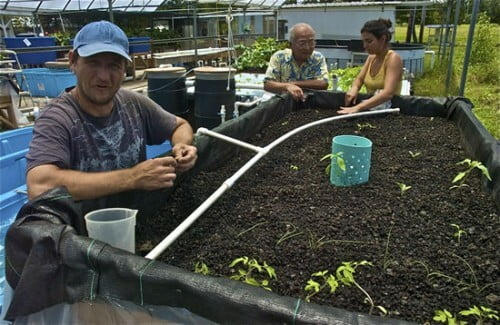 hawaii hilo sustainable agriculture degrees