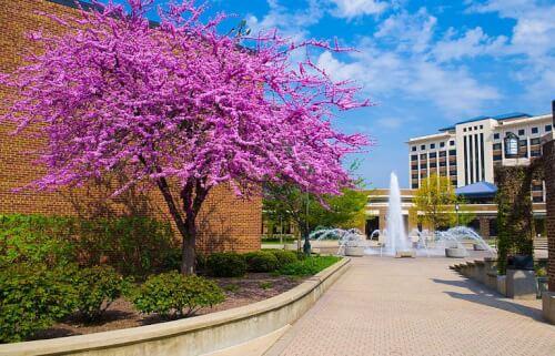 Indiana State University mpa online