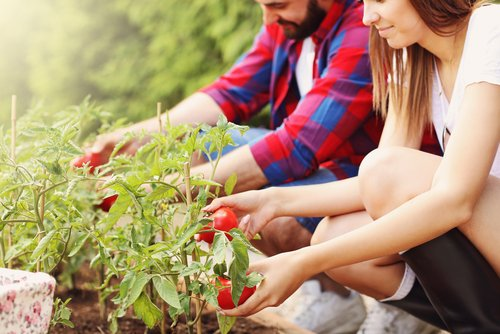 Top 30 Sustainable College-Run Farms - College Values Online