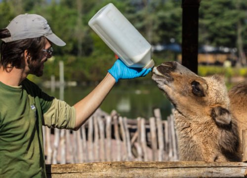 An image accompanying our article on zoologist job duties