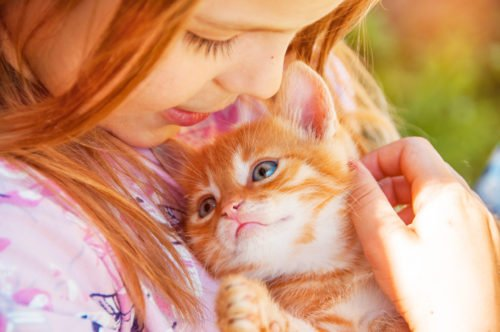 animal behavior internships