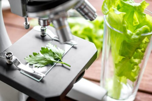 what is food technology